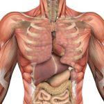 110607_anatomy-391